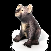 Koala luonnonkumista
