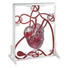 Pumppaava sydän