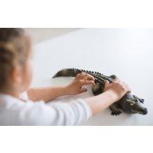 Krokotiili, luonnonkumista