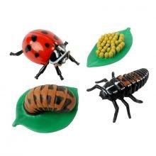 Elinkaari: Munasta hyönteiseksi: Leppäkerttu
