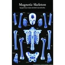 Magneettinen Luuranko
