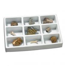 Fossiili kokoelmani