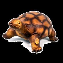 Kilpikonna, luonnonkumista
