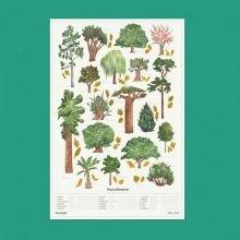 Juliste 50 X 70 cm - 18 tärkeintä puulajia