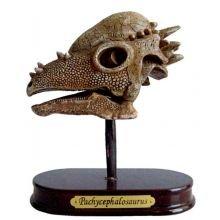 Arkkeologisetti - Pachycephalosaurus