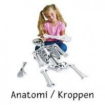 Anatomia/Vartalo